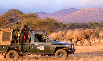rangers elephants