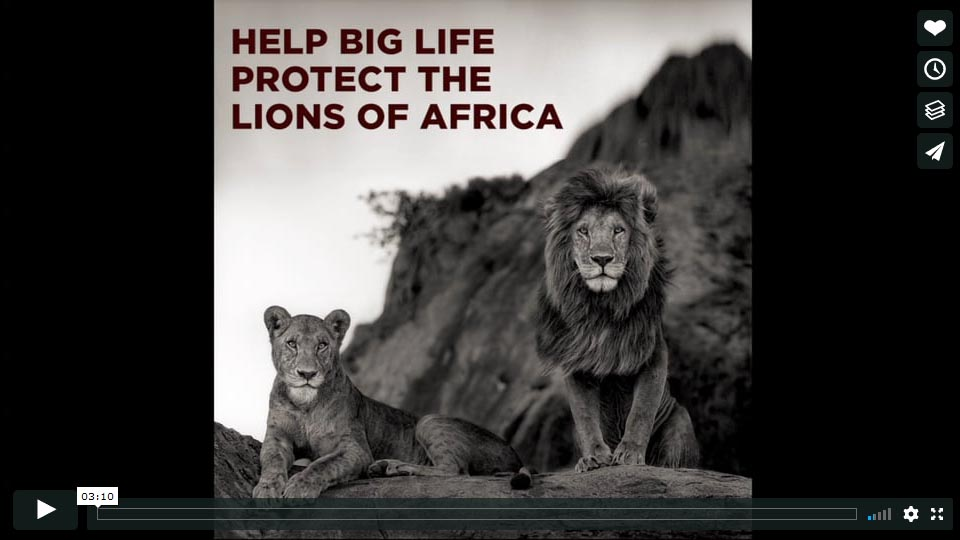 Big Life Predator Compensation Fund Film