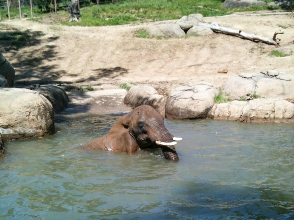150120 1 1 What Do Zoos Mean for Wild Elephants