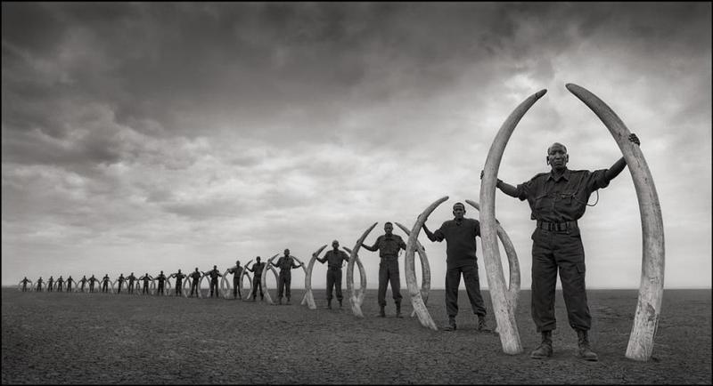 110918 1 1 Big Life Rangers Holding Tusks of Killed Elephants (Prior to Big Life) Amboseli July 2011