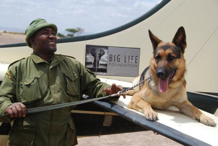 111214 1 1 Jazz One of Big Lifes Tracker Dogs On the Wing of Richards Plane with His Handler Mutinda