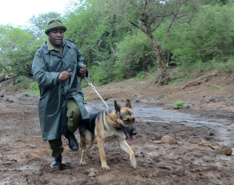 120515 1 2 Jazz One of Big Lifes Tracker Dogs with Mutinda His Handler