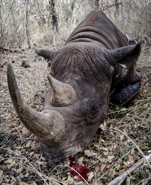 120925 1 1 Rhino Gunned Down in the Chyulu Hills
