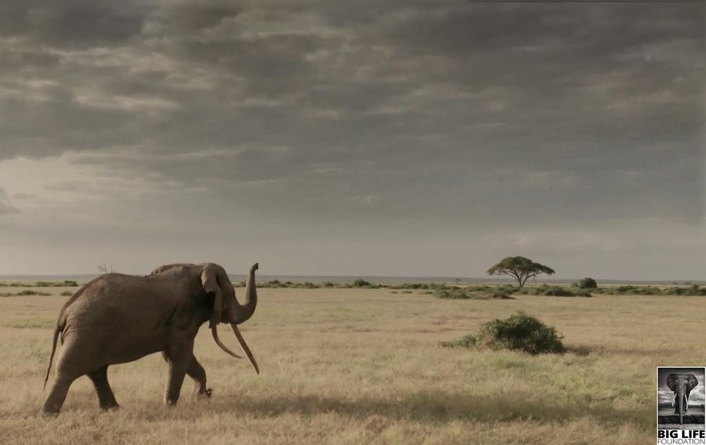 140127 1 1 A Change Comin On the Newly Minted Kenya Wildlife Act and What It Means for Big Life