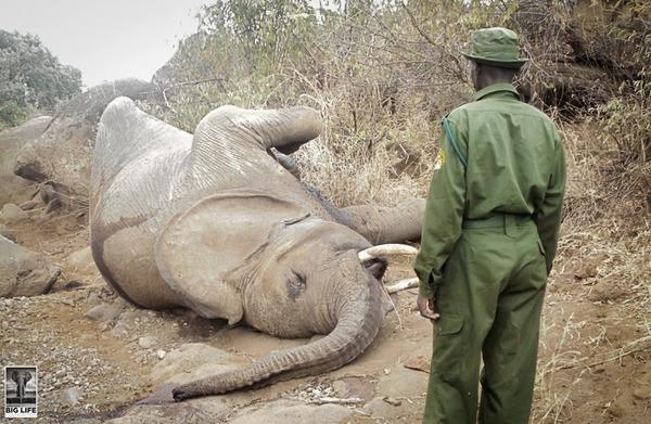 140804 1 1 9 Year Old Elephant Dead in Human Wildlife Conflict