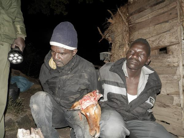 141002 1 1 Multiple Arrests Made as Bushmeat Poaching Intensifies