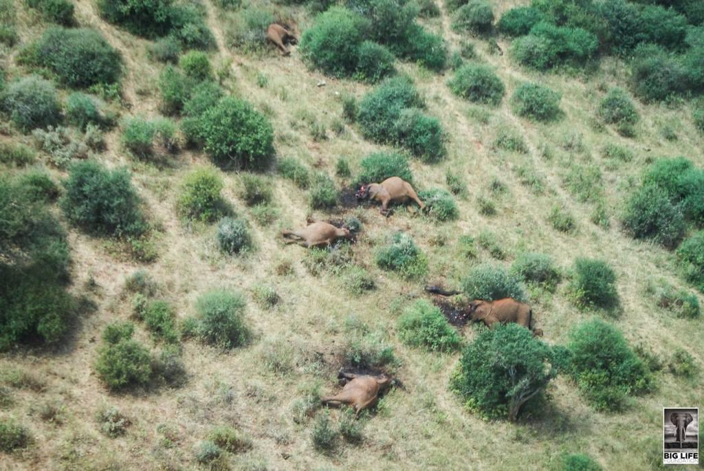 150730 1 1 Elephant Family Butchered in Tsavo