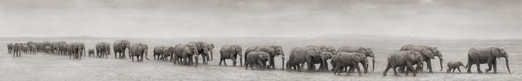 The Elephants Line in the Sand Chapter Two