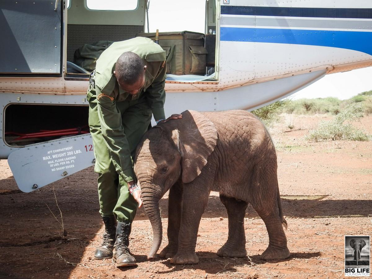 Baby elephant rescued