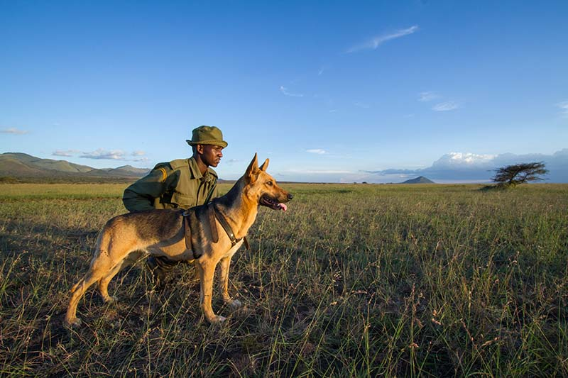190710 Tracker Dog Didi and her fellow Ranger keep watch over East Africa