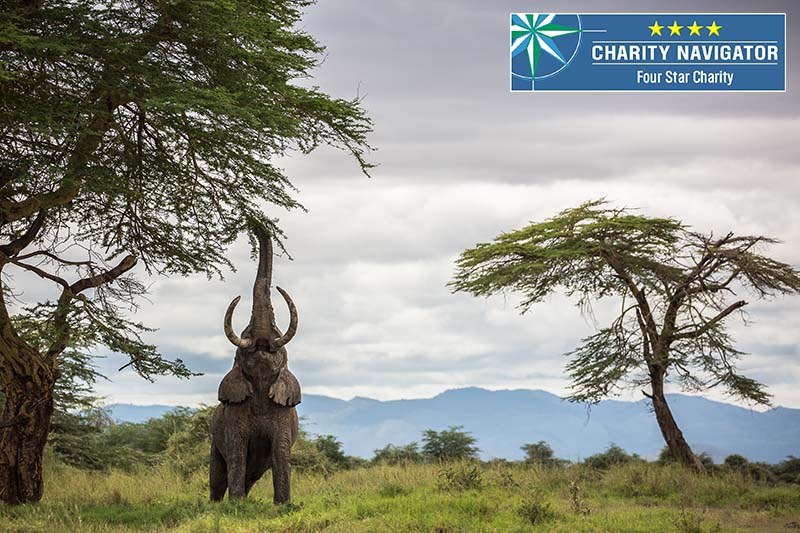 Elephant reaching up for a 4-star Charity Navigator rating