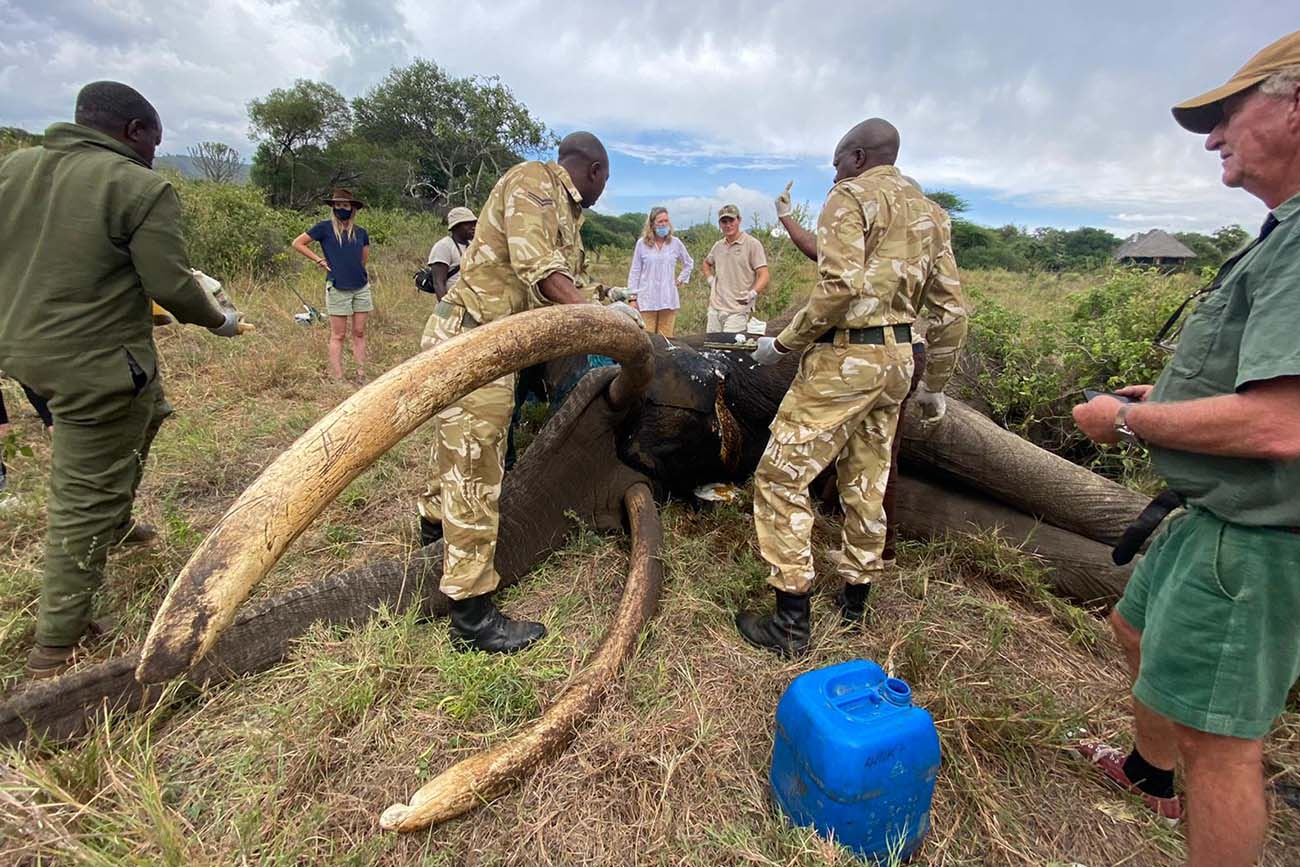 210327 elephant has wound treated in east africa