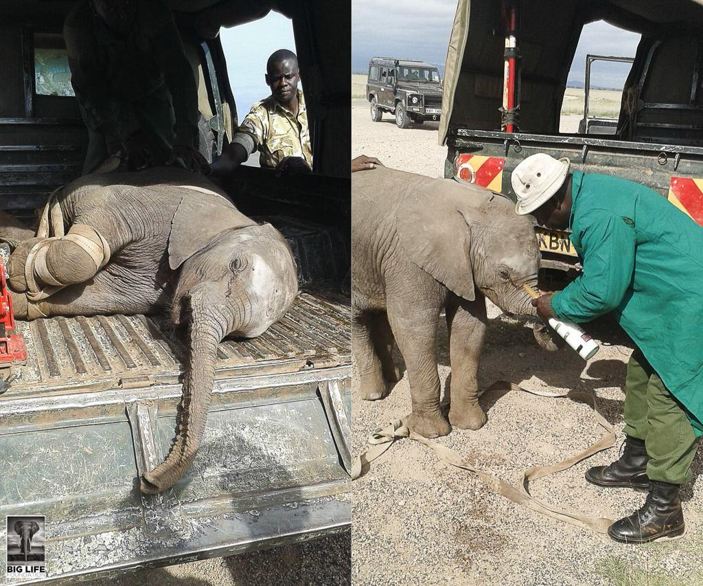 160524 1 1 Blind Baby Elephant Rescued