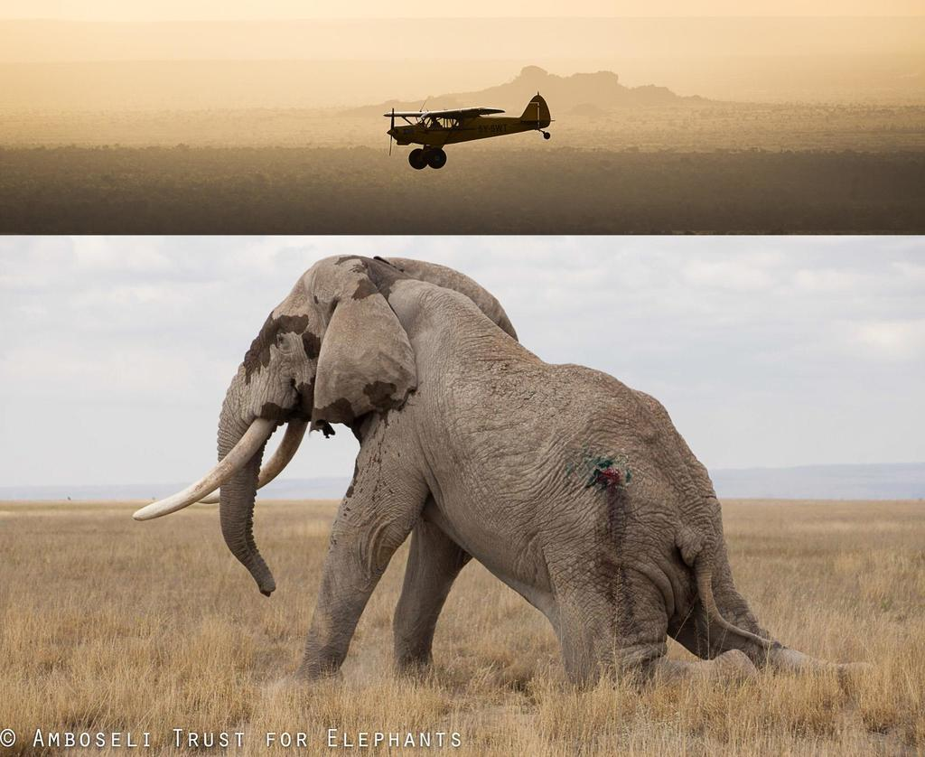 160701 1 1 Spears Fly in Amboseli