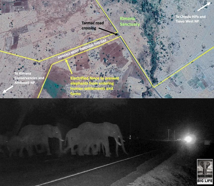 190210 Threading elephants watermarked