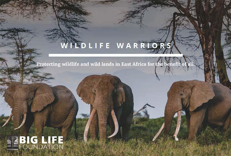 Wildlife Warrior certificate supporting Big Life Foundation