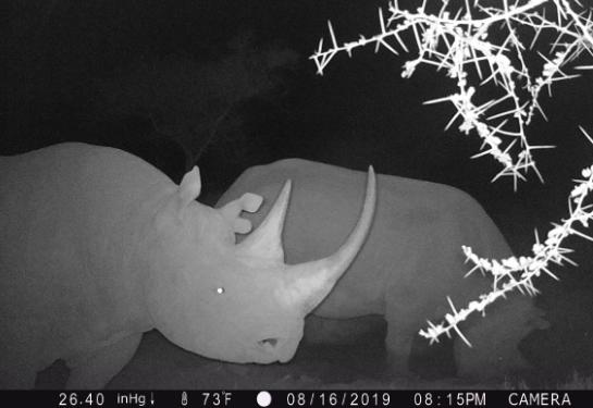 190920 rhino captured on trail camera in East Africa
