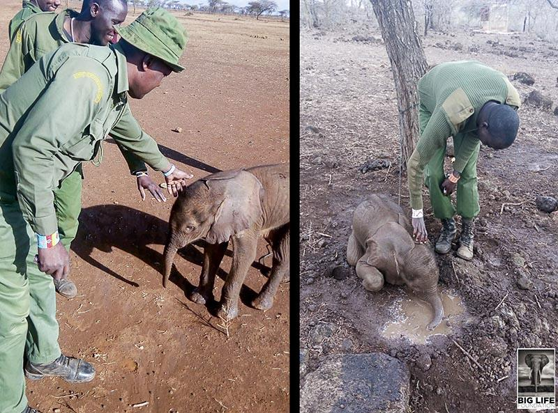 191008 Baby elephant rescue in East Africa