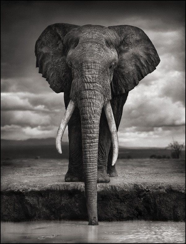 New York Times Article About Nick Brandt and Big Life Foundation
