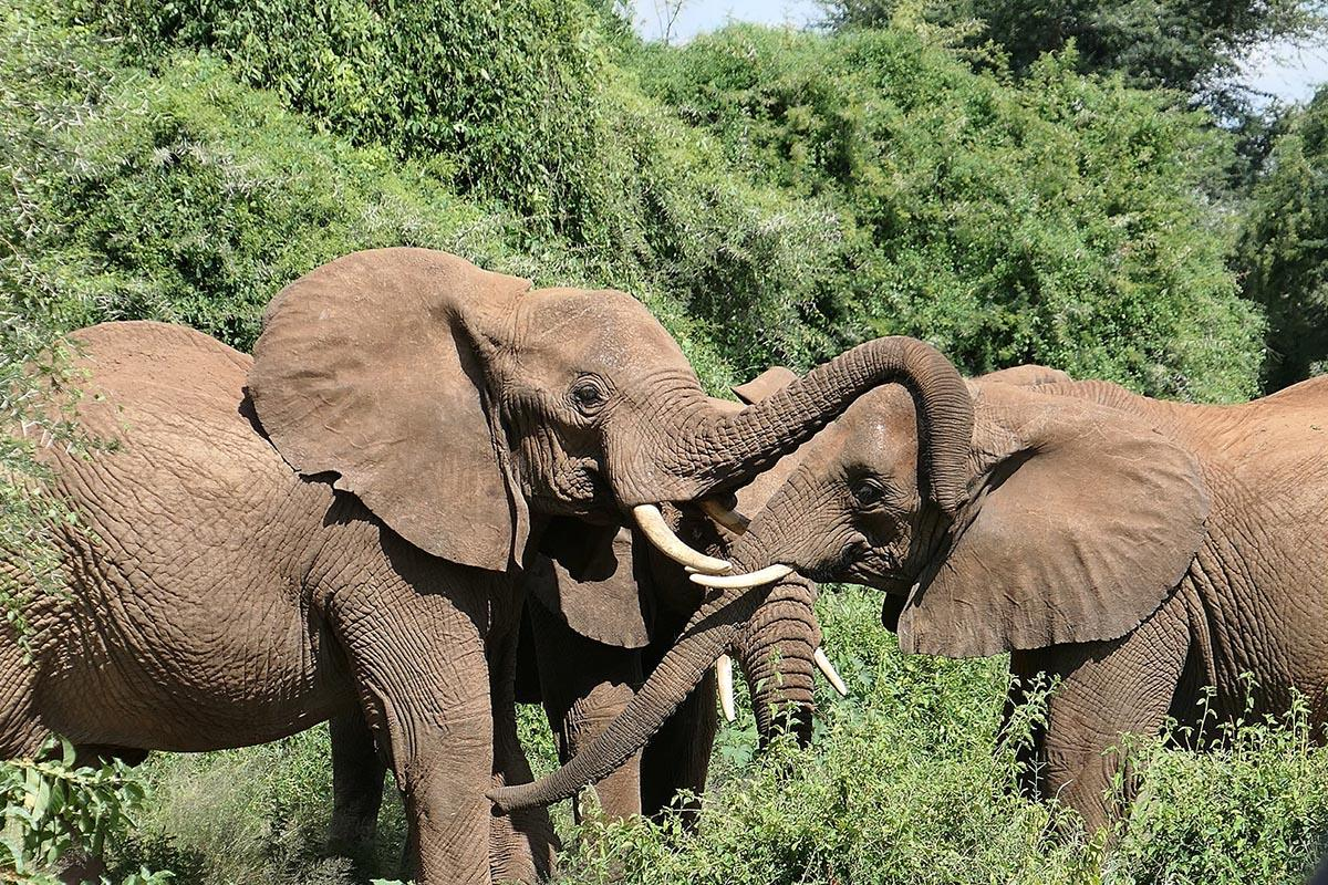 Who Will Save the Elephants