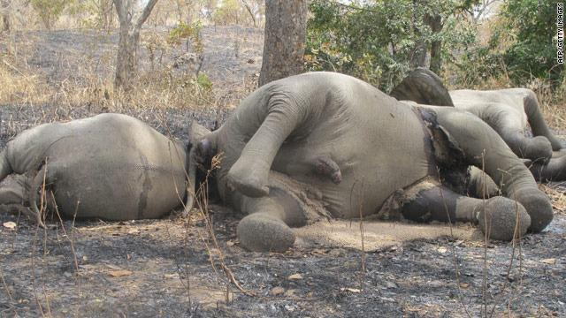 110226 1 1 The Slaughter of Elephants in Chad Grows
