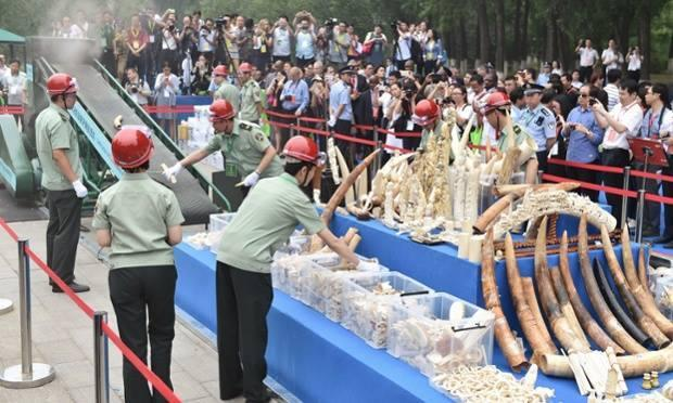 150607 1 1 China Promises to Phase Out Ivory Industry