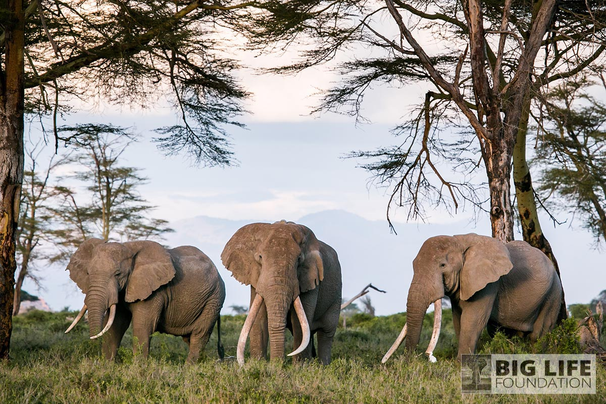 wildlife elephants 01 1200x800